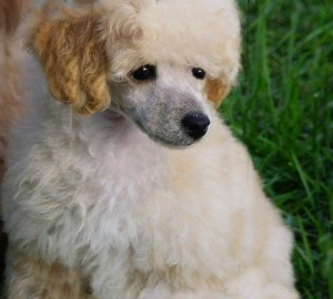 Hicks Pup 2
